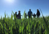 © Reuters. FILE PHOTO: Crop scouts and grain buyers survey a wheat field in Leoni, Kansas