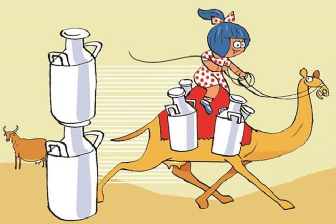 Amul said it will be deodorising camel milk to eliminate volatile odours from it. (Image: IE)
