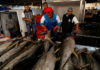 © Reuters. FILE PHOTO: A worker checks the quality of Mexican tuna displayed at a fish market in Mexico City